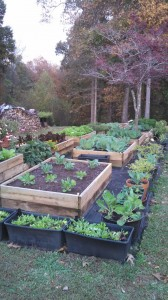 Gardening in the fall can be relaxing. get the soil prepared, make a list of the seeds you'd liek to plant. There are 2 planting seasons and one in near the fall. You can harvest i your garden almost all year round, like the owner of ContractorMen, Cumming, GA does.